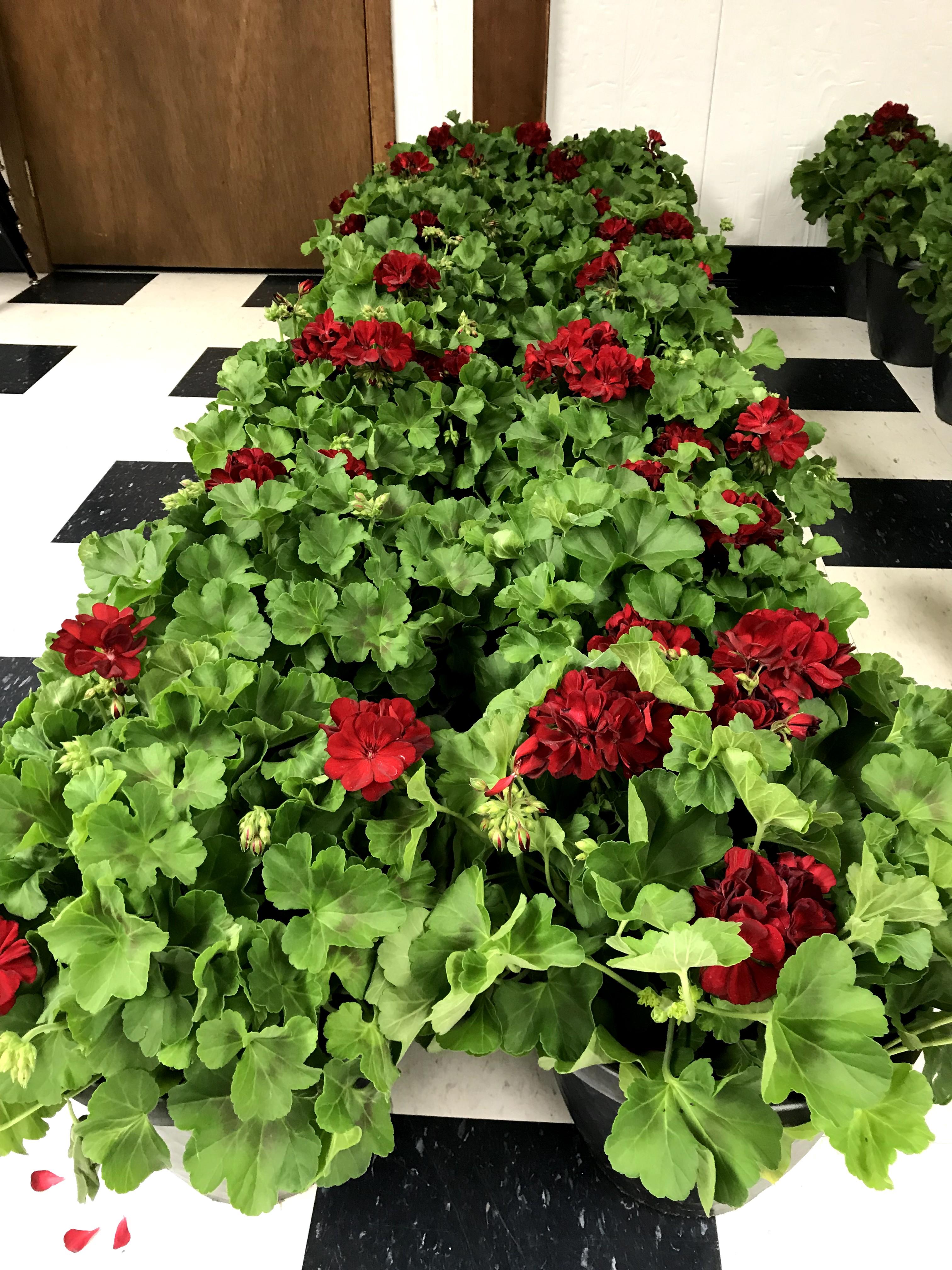 All Flower pots
