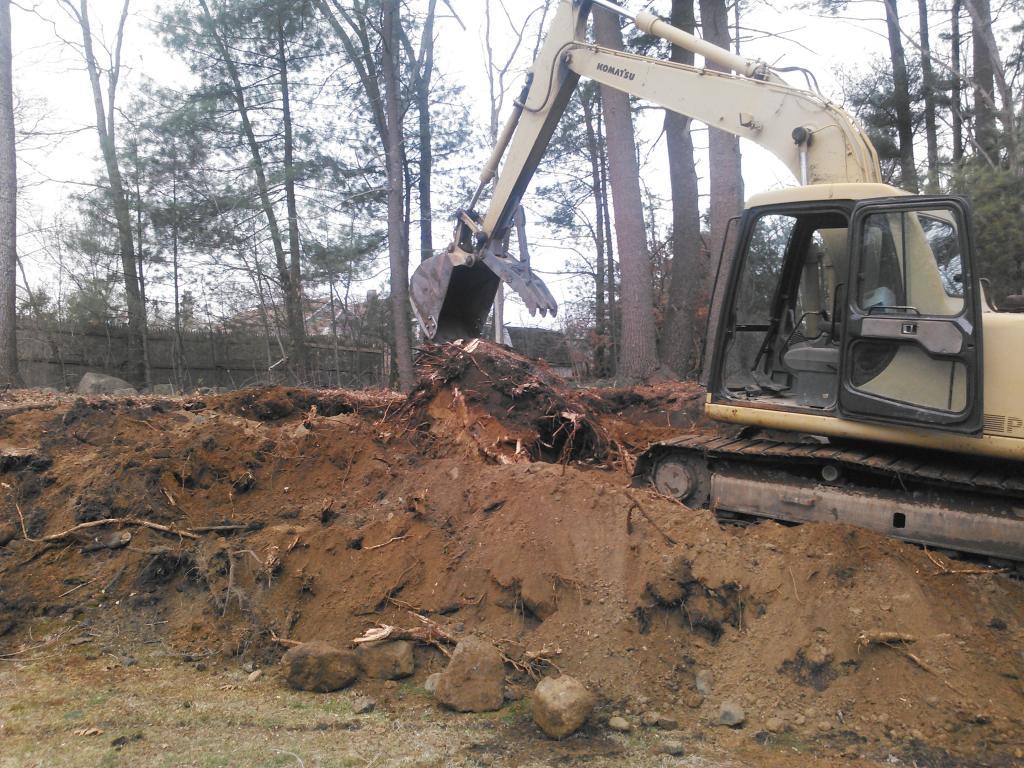big stump removed