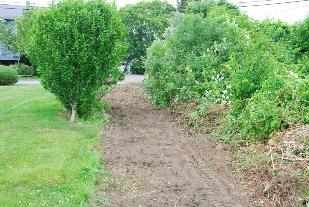 land clear of overgrown brush