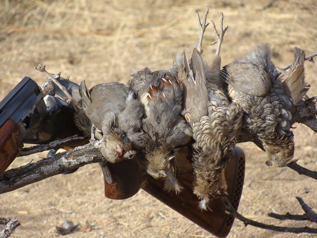Mixed bag of quail