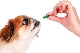 Hunde kosttilskud